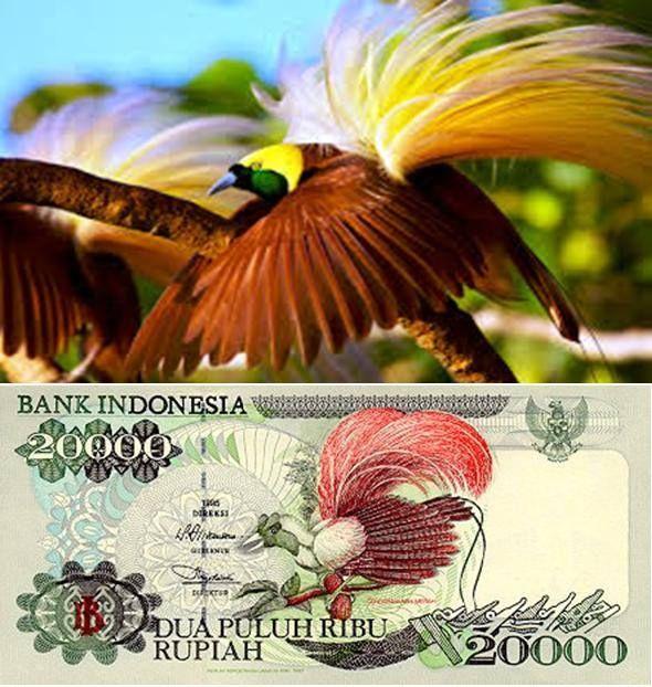 Burung Cendrawasih pada gambar uang pecahan 20.000 Rupiah