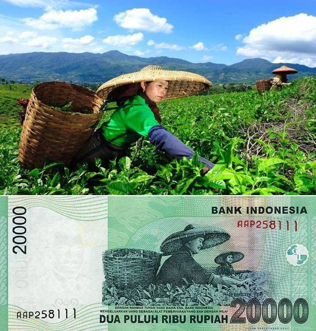 Kebun Teh Malino di Sulawesi Selatan.