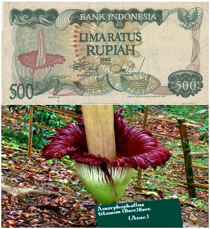 Bunga Bangkai merupakan tumbuhan dari suku talas-talasan (Araceae) endemik dari Sumatera, Indonesia.