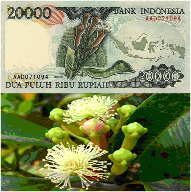 Tanaman asli Indonesia, cengkih.