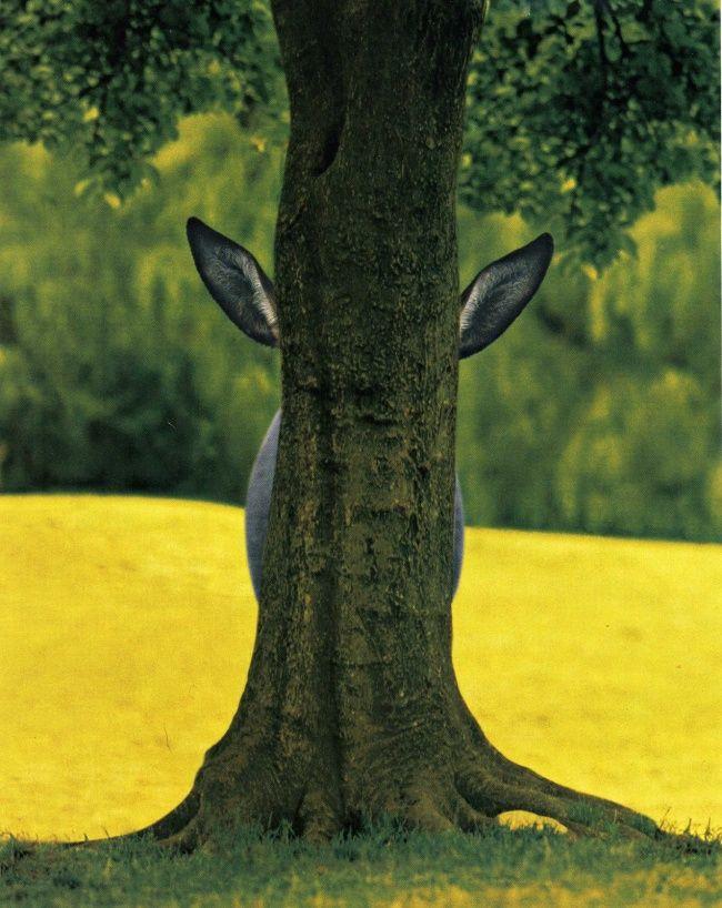 Eits..ada yang sembunyi dibalik pohon!
