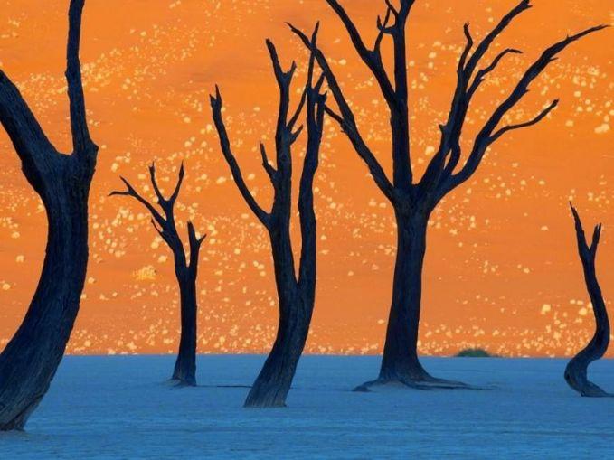 Pohon Tanduk Unta Foto di atas diambil oleh seorang fotografer NatGeo bernama Frans Lanting yang memperlihatkan sekumpulan pohon tanduk unta di Naukluft Park, Namibia. Latar belakang berwarna oranye merupakan cahaya dari matahari pagi di lokasi tersebut.