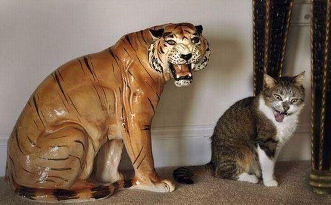 Kucing yang memperlihatkan ekspresi sama dengan patung macan disebelahnya.
