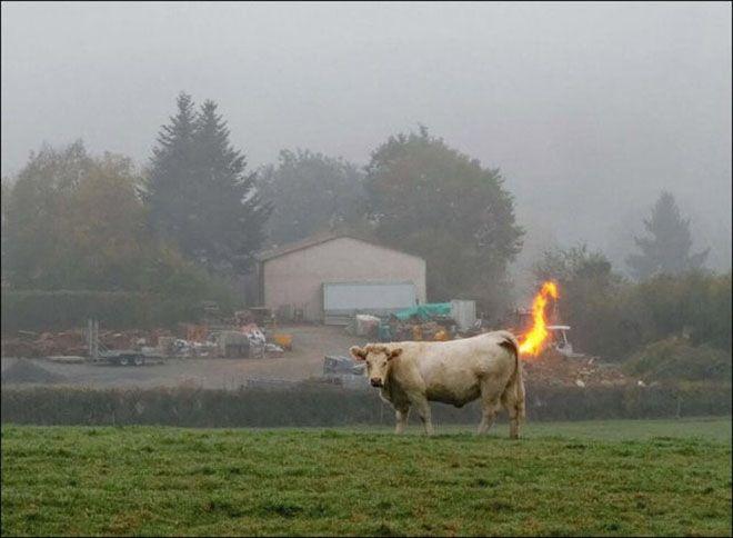 Gambar ini seperti sapi yang kentut mengeluarkan api ya kliklinker.