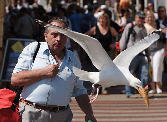 Sepintas nggak ada yang aneh dari foto berikut, tapi ternyata eskrim pria ini dibawa kabur sama burung.
