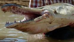 WoW... INI DIA Ikan Purba Zaman Prasejarah Yang Masih Hidup Sampai SAAT INI..!!!