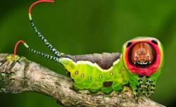 10 Binatang Berwajah Menyeramkan Seperti Alien Yang Hidup Di Bumi