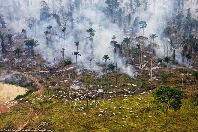 Foto 2 : Kebakaran Inilah yang terjadi kalau sebuah hutan kebakaran. Sebagian besar penghuni hutan termasuk segerombolan domba yang sibuk menyelamatkan dirinya tersebut?