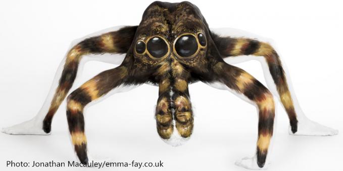 dari jauh dia memang tampak seperti tarantula, tapi coba perhatikan. Apakah kau melihat bentuk kaki, tangan dan wajah diantara warna putih ?