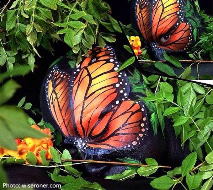Sayap kupu-kupu seringkali menipu. pakah kalian melihat mata diantara ragam corak sayapnya ?