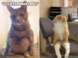 Beberapa Foto Ini Membuktikan Kalau Kucing Punya Pemikiran Sendiri