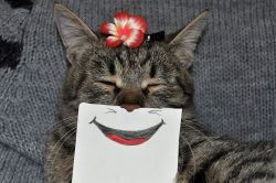 Pikir Ulang Lagi Deh, Kenapa Kalian Masih Phobia Kucing Setelah Lihat Foto-Foto Ini!!