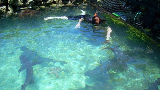 Berenang di kolam jernih dengan aneka wahana air sudah biasa. Gimana kalau berenang dengan hiu? di Jepara, Jawa Tengah ada tempat wisata seperti itu loh. Kita hanya membayar Rp 5000 untuk melihat hiu, dan menambah Rp 10000 untuk berenang denan hiu. Seru, kan? Eh, disana ada 30 hiu.. Waahhhhhh