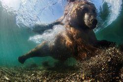 14 Foto Terbaik Dari Underwater Photography Award 2016