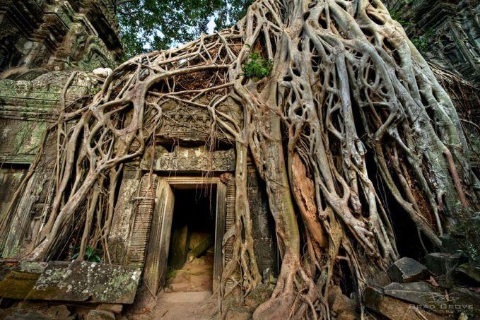 Ini adalah akar besar yang membungkus Prohm Temple Ta di Angkor, Kamboja. Candi ini pernah menjadi tempat untuk pertunjukan musik, menari, dan dindingnya pernah dihiasi dengan batu mulia.