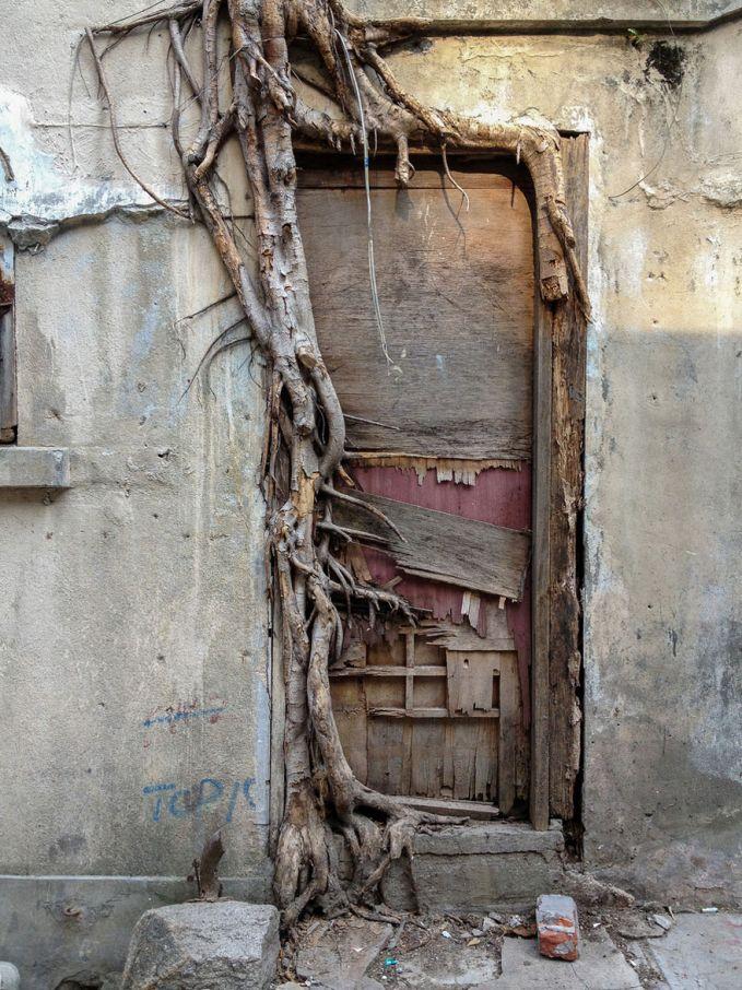 Ketika pohon dibiarkan hidup liar begitu saja, mereka bisa menjalar bahkan seperti menguasai bangunan tua yang ditinggalkan.