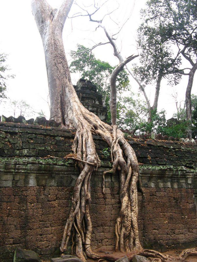 Ada lebih dari 23.000 jenis pohon di dunia, yang semuanya memiliki berbagai jenis akar. Beberapa akar memiliki ukuran lebih besar daripada akar yang lain. Kita juga mungkin pernah melihat satu atau dua pohon yang akarnya memecah keluar dari tanah, memperlihatkan jalinan akarnya yang kuat.