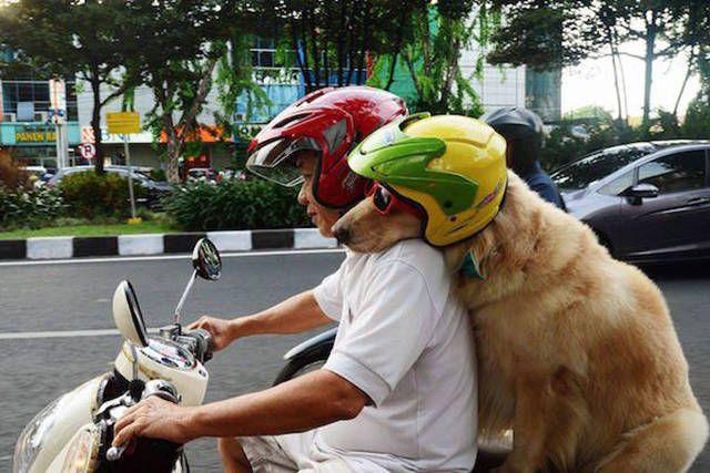 Anjing aja pakai helm dan pegangan, masa kamu enggak??