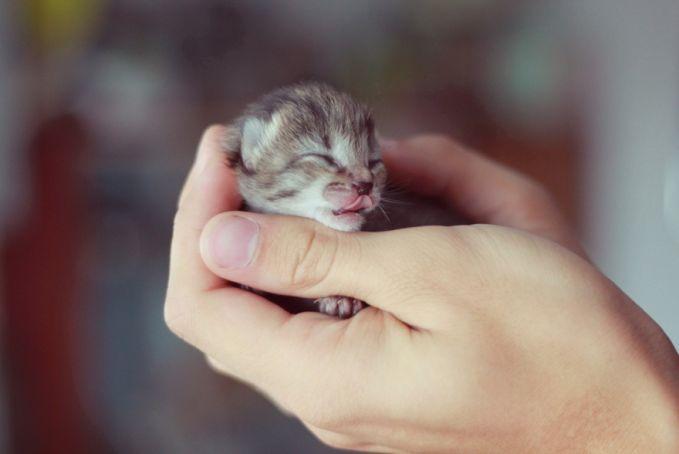 Duuhh..siapa sih yang nggak suka sama bayi kucing, apalagi yang manja-manja ginii..