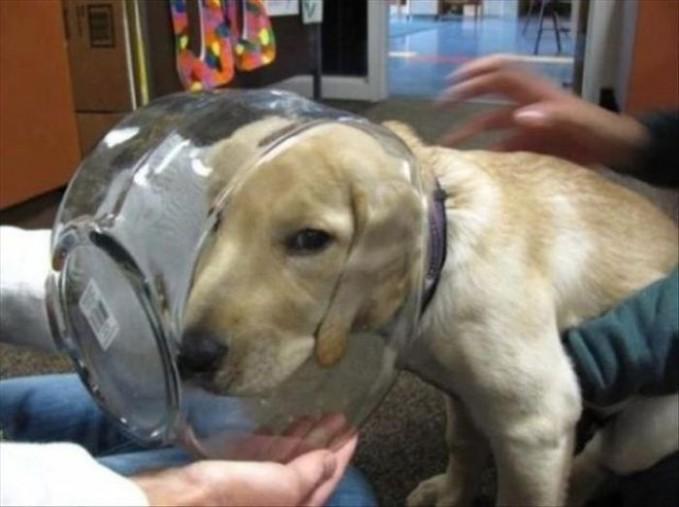 Kasian banget anjing ini kepalanya terjebak didalam akuarium, apa pengen jadi ikan ya??