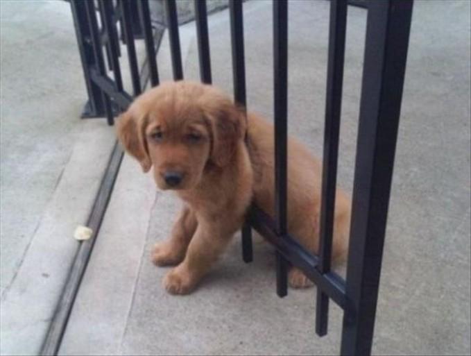 Kasiaann, anjing kecil ini kejebak didalam pintu gerbang.