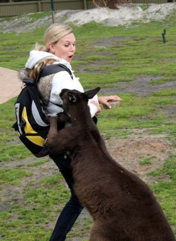 kanguru nya minta digendong tuh..