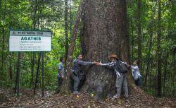Menakjubkan! Inilah 6 Pohon Tertinggi di Dunia
