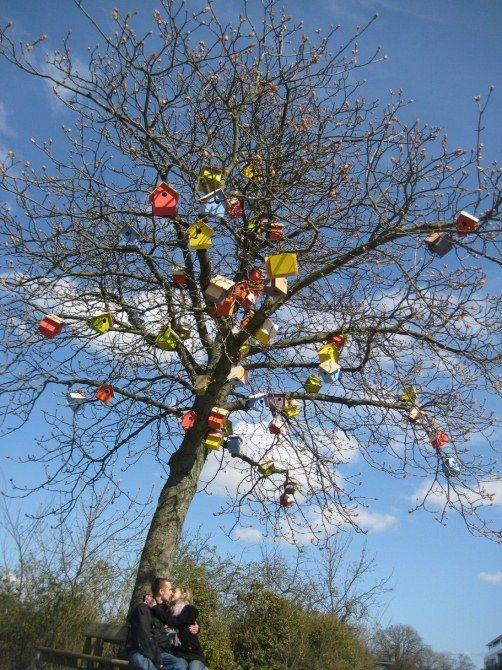 #3 250 BIRDHOUSE Pohon-pohon yang besar dipasang rumah burung yang banyak. Selain menyelamatkan banyak burung, pohon tersebut menjadi photoable.