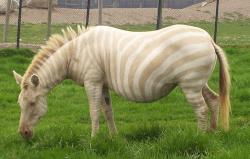 20 Hewan Albino Ini Dijamin Akan Membuatmu Berdecak Kagum!
