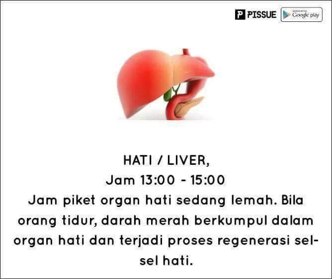 #4 HATI SIANG HARI Hati memiliki fungsi untuk membentuk sel darah merah. Dan pada jam ini, hati dalam kondisi yang lemah. Jadi bekerja jangan terlalu dipaksakan.