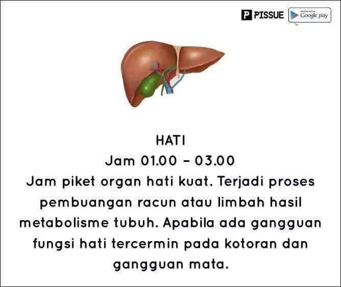 #10 HATI DINI HARI Wah berbeda dengan organ lainnya, pada jam ini hati bekerja dengan maksimal. Hati menjadi proses pembuangan racun atau limbah hasil metabolisme tubuh.