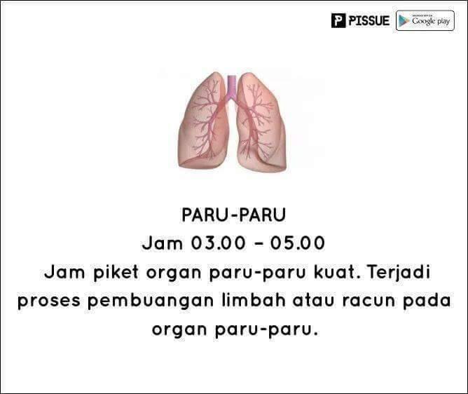 #11 PARU-PARU DINI HARI Paru-paru menjadi bekerja maksimal di dini hari. Ia memproses pembuangan racun pada organ paru-paru.