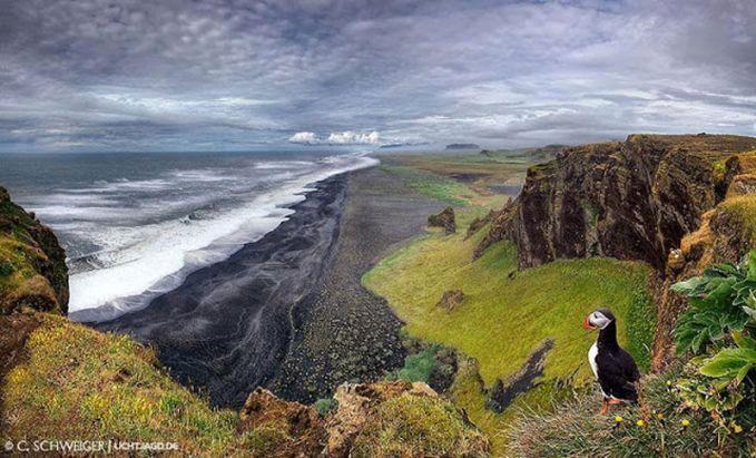 Puffin di Dyrholaey Dyrholaey, sebuah semenanjung kecil di pantai selatan Islandia. Tempat ini adalah situs sarang utama untuk burung puffin. Saat musim panas, banyak puffin yang datang untuk beristirahat di sekitaran tebing.