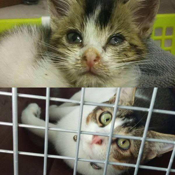 kucing juga butuh adopsi loh gaes, daripada beli yang mahal-mahal, mending adopsi yang di penampungan..
