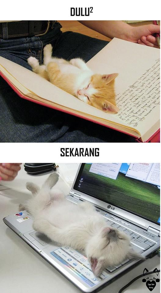 #2 BACAAN Dulu : Kucing dapat tidur di antara kertas-kertas buku. Sekarang : Kucing tidur di atas keyboard laptop