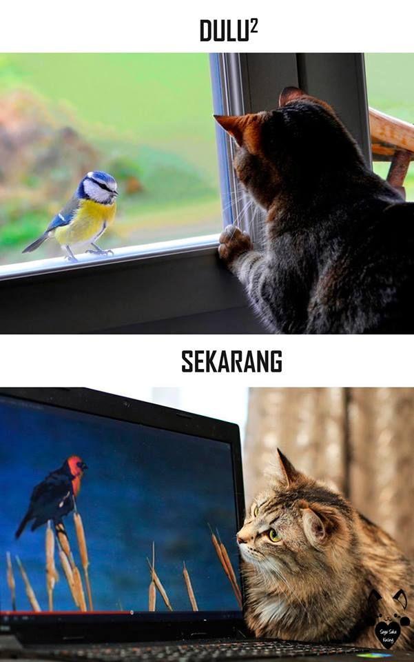 #4 BURUNG Dulu : Kucing melihat burung dari balik jendela. Sekarang : Kucing melihat burung dari layar monitor.