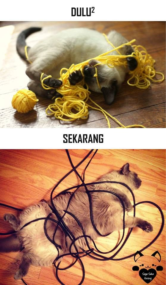 #5 TERLILIT Dulu : Kucing terlilit oleh benang-benang untuk merajut. Sekarang : Kucing terlilit oleh kabel-kabel listrik.