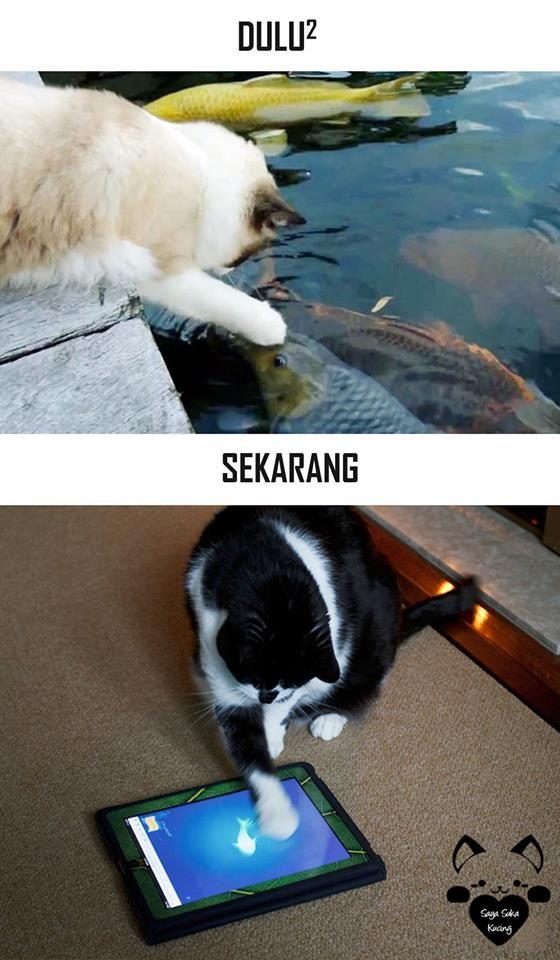 #6 IKAN Dulu : Kucing melihat ikan di pinggir kolam. Sekarang : Kucing melihat ikan dari layar tab