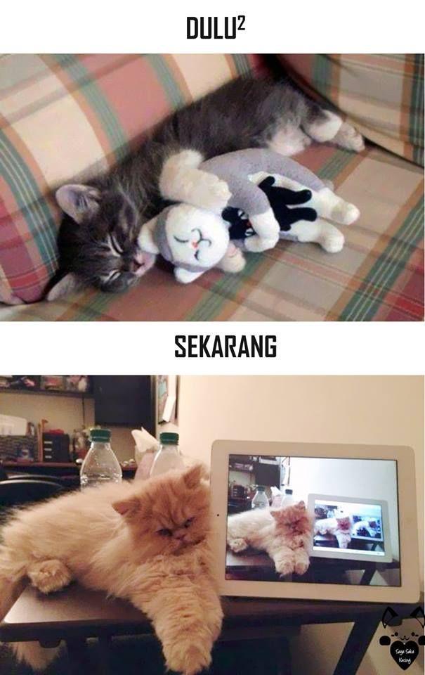 #7 TIRUAN KUCING Dulu : Kucing tidur dengan memeluk boneka kucing Sekarang : Kucing berfoto dari dengan gadget