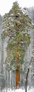 10 Pohon WOW di Dunia Dengan Fakta-Faktanya yang Harus Kamu Tahu