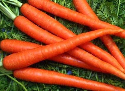 Hasil gambar untuk wortel 7