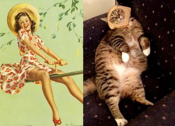 astaga, kucing ini gak sadar apa ya kalo model punya kriteria badan ideal sendiri.. sedangkan badan doi..