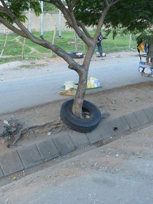 Ada sebuah ban yang seharusnya menempel di kendaraan malah terjebak di dalam sebuah pohon. Mungkin ban ini sudah ada sebelum pohon ini tumbuh ya Pulsker.