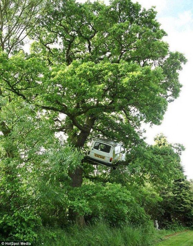Kalau tadi di atas gedung tinggi, sekarang ada mobil nyangsang di atas pohon..bisa gitu ya kliklinker.