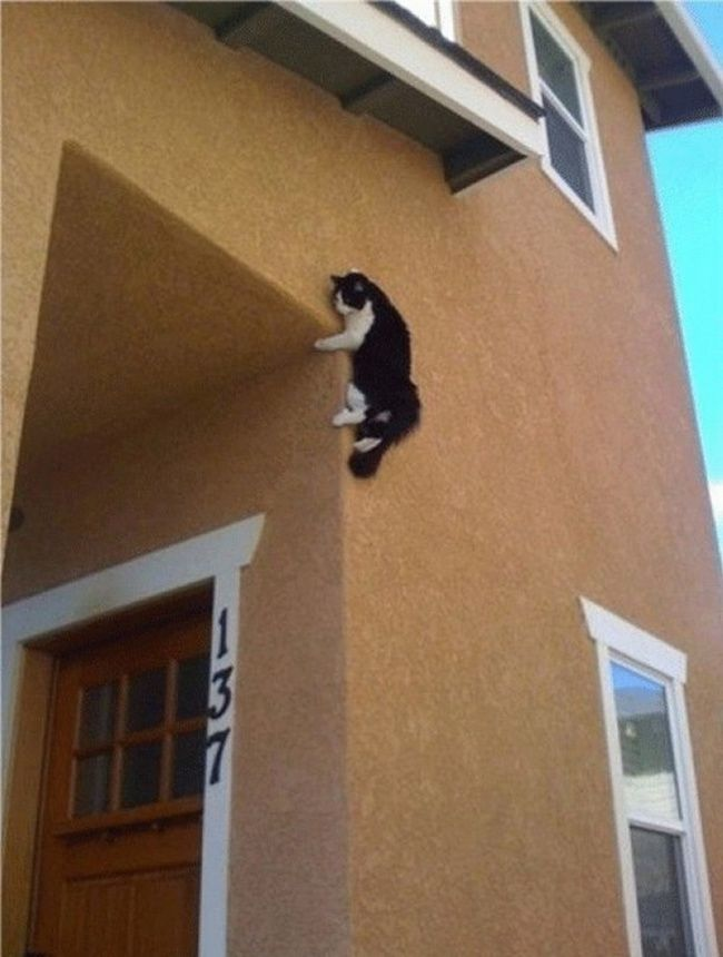 Coba tebak ini kucing apa tikus? Atau tikus berbulu kucing..hehehe