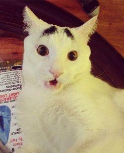 Kenalan Sama Kucing Unik dan Kocak Yang Punya Alis Menakjubkan Ini Yuk!