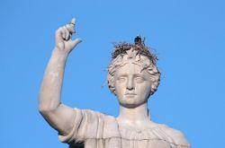 Bukan Hanya Di Pohon, Burung Pun Bisa Bersarang Dan Bertelur di Tempat Yang Gak Biasa!