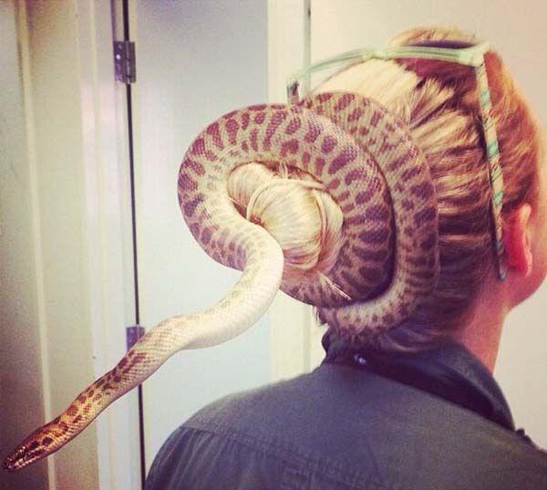 pertanyaannya, itu ular asli apa boongan yak, keliatannya sih asli!