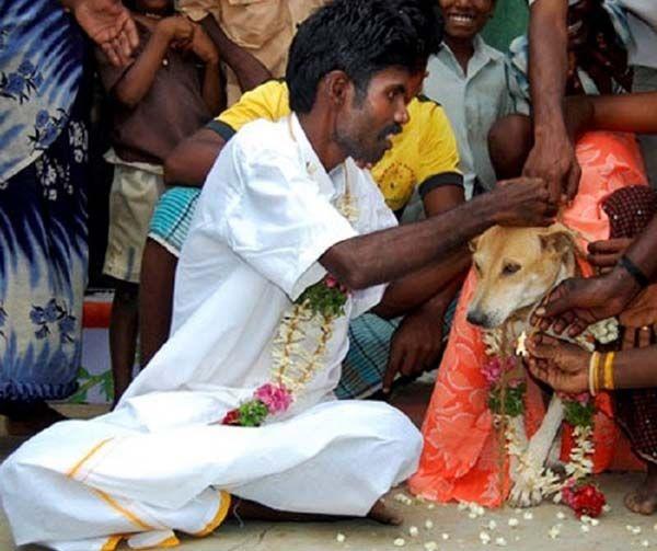 kalo ini buka lagi mandiin anjingnya loh, tapi pria india yang nikah ama anjing! semacam ritual gitu lah.. idih..
