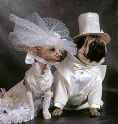 kalo ini adalah pasangan anjing yang melakukan photoshoot setelah resmi menikah